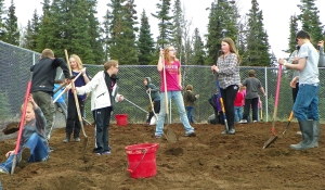 Photos by Joseph Robertia, Redoubt Reporter. Students at Tustumena Elementary School spread soil, dig holes and plant willows and garden crops last week as part of Schoolyard Habitat project.