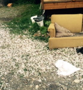 Photo courtesy of Jacki Michels. Spoiled or soiled? Jacki Michels' pup took the stuffing out of a pillow, feathering her outdoor nest with the mess. But that was nothing compared to the anniversary present left by her brother.