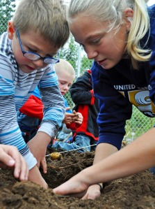 Photos by Joseph Robertia, Redoubt Reporter. Kindergartener Jaxson Bush is assisted by sixth-grader Emilie Hinz while digging up potatoes from a garden at Tustumena Elementary School on Friday. The garden was planted to give kids hands-on learning experiences with science and math, as well as teaching them about the origins of the food they eat.