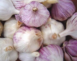 Photo courtesy of USDA. Garlic is more diverse than just the kind available at most grocery stores in Alaska. Hardneck garlic is actually better suited to growing in cold climates.