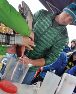 Mike Booz, a sportfish biologist with the Alaska Department of Fish and Game office in Homer, helps two children massage the milt from a male salmon onto eggs, already collected from a female, in order to fertilize them.