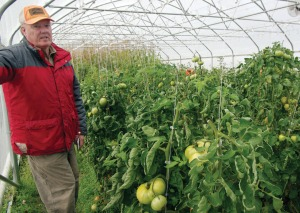 Photos by Jenny Neyman, Redoubt Reporter. Patrick White planted over 150 tomato plants in 14 varieties in his high tunnel this year. In his first attempt at growing giant tomatoes, he broke the state record and finished high in the world standings.