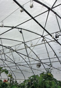 Photo by Jenny Neyman, Redoubt Reporter. White supported his tomato plants and giant tomatos with a system of lines strung from roller hooks along the roof of his high tunnel so the vines wouldn't slump and restrict nutrients getting to the fruit.